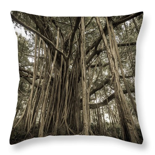 3scape Throw Pillow featuring the photograph Old Banyan Tree by Adam Romanowicz