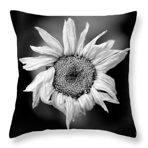 Flower Throw Pillow featuring the photograph Old Beauty by Michael Arend