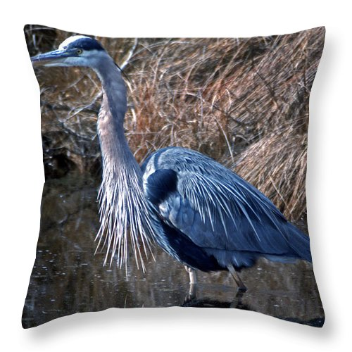 Names Of Birds Throw Pillow featuring the photograph Old Blue by Skip Willits