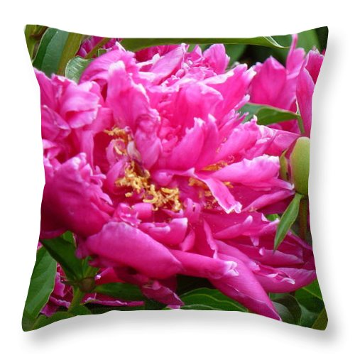 Peonies Throw Pillow featuring the photograph Old Fashion Beauties by Barbara Ebeling