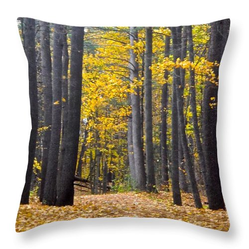 Trees Throw Pillow featuring the photograph Old Pine Trees by Stephanie Moore