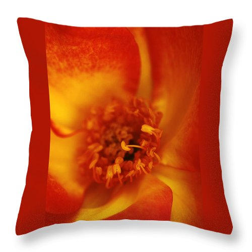 Card Throw Pillow featuring the photograph Old Rose by Guy Shultz