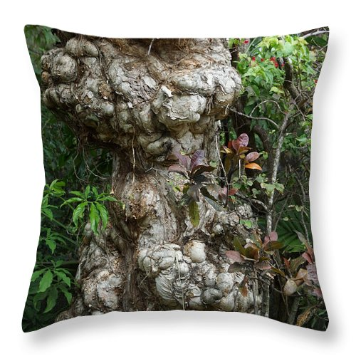 Old Tree Throw Pillow featuring the mixed media Old Tree by Rafael Salazar