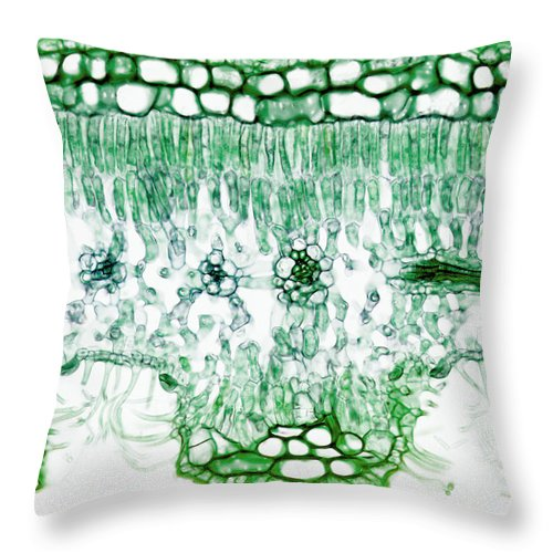 oleander leaf nerium stomata lm throw pillow for sale by science