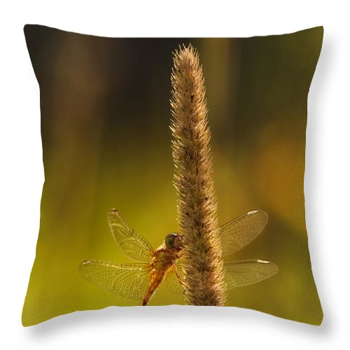 Dragonfly Throw Pillow featuring the photograph On A Summer Morning by Sue Capuano