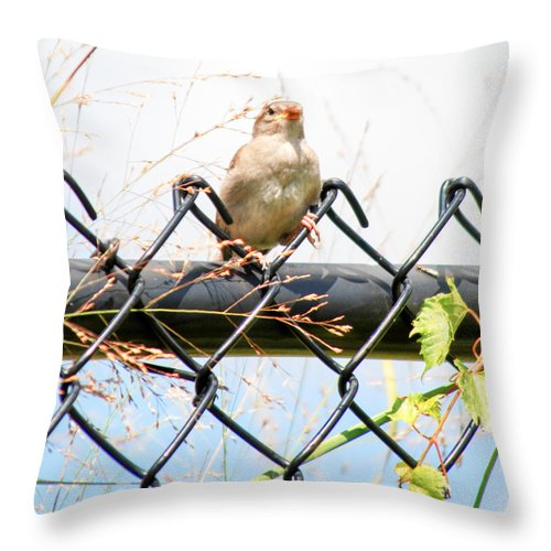 Sparrow Throw Pillow featuring the photograph On The Fence by Optical Playground By MP Ray