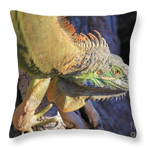 Iguana Throw Pillow featuring the photograph On The Hunt by Adam Jewell