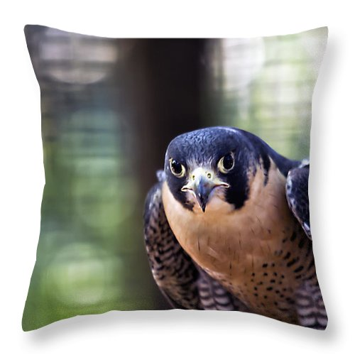 Brad Granger Throw Pillow featuring the photograph On The Hunt by Brad Granger