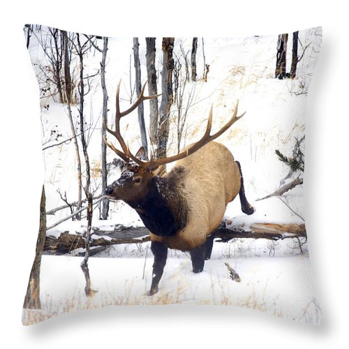 Elk Throw Pillow featuring the photograph On The Move by Mike Dawson
