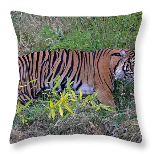 Tiger Throw Pillow featuring the photograph On The Prowl by Frank Larkin