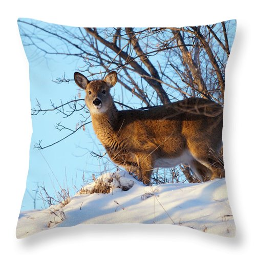 Deer Throw Pillow featuring the photograph On The Ridge by Lori Tordsen