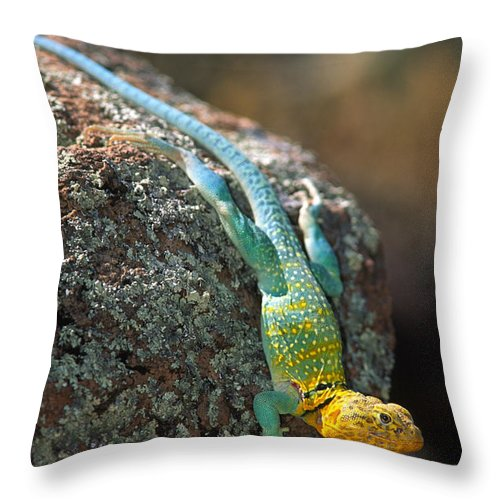 America Throw Pillow featuring the photograph On The Rocks by Inge Johnsson