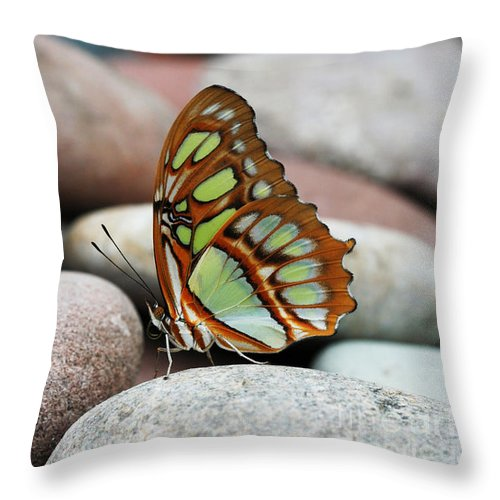 Butterfly Throw Pillow featuring the photograph On The Rocks by Judy Whitton