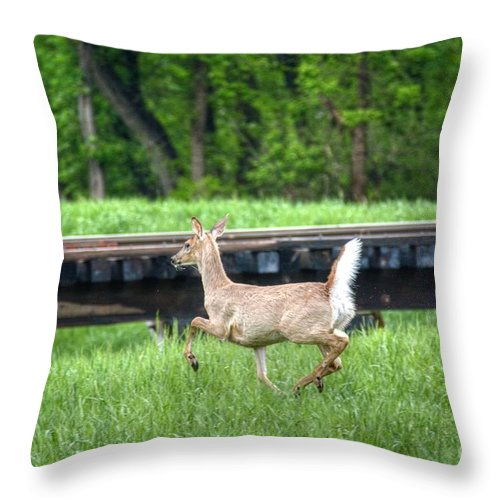 Deer Throw Pillow featuring the photograph On The Run by M Dale