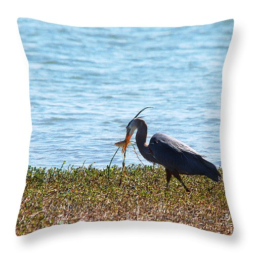 Bird Throw Pillow featuring the photograph One Failed Get Away by Roy Williams