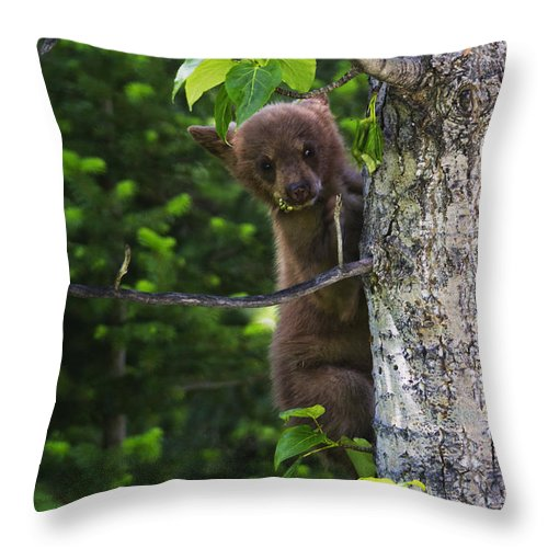Waterton Lakes National Park Throw Pillow featuring the photograph One Of Three by Mark Kiver