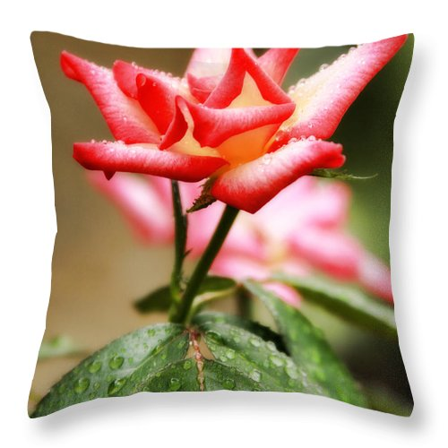 Floral Throw Pillow featuring the photograph One Rose by Joan Bertucci