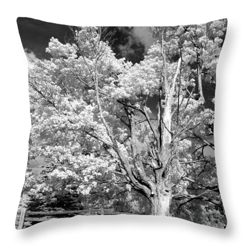 Summer Throw Pillow featuring the photograph Ontario Summer Infrared by Steve Harrington
