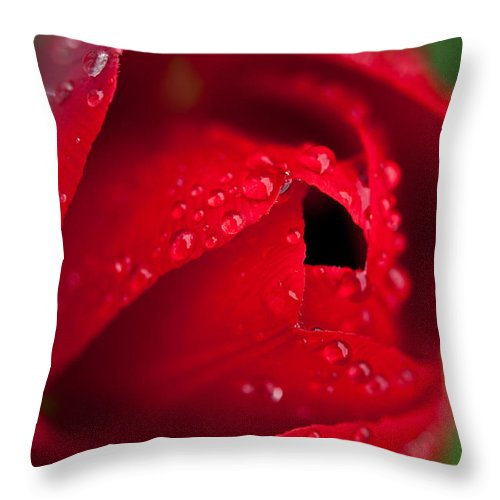 Tulips Throw Pillow featuring the photograph Opening Up by Sabine Edrissi