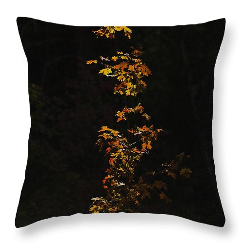 Fall Foliage Throw Pillow featuring the photograph Orange And Red by Scott Moss