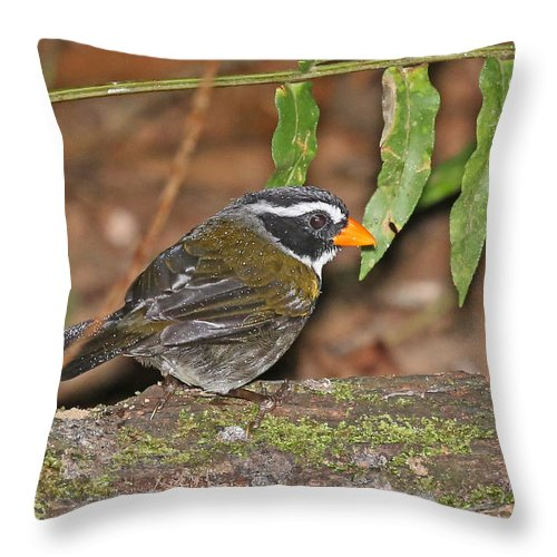 Nature Throw Pillow featuring the photograph Orange-billed Sparrow by Mike Dickie