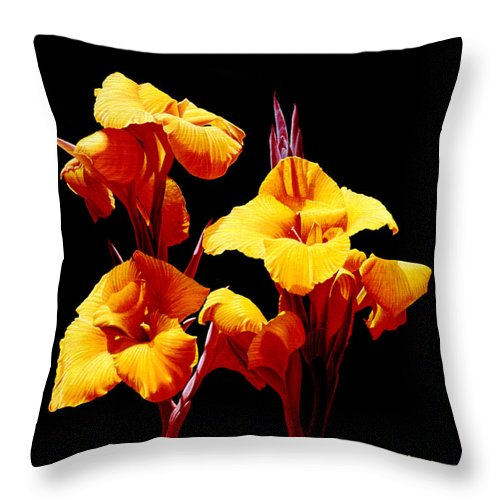 Yellow Cannas Throw Pillow featuring the painting Orange Cannas by Gary Hernandez