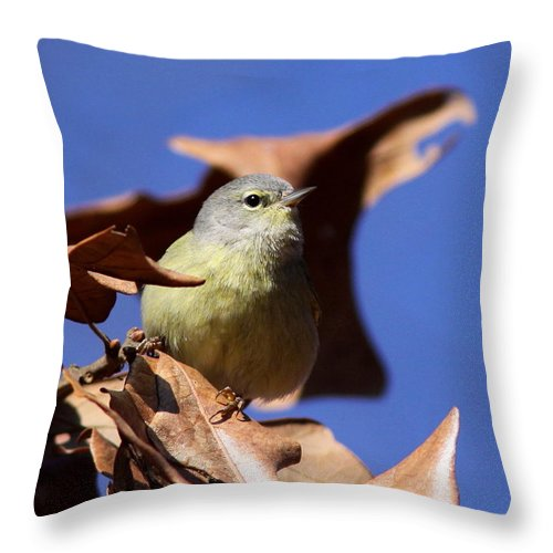 Orange-crowned Warbler Throw Pillow featuring the photograph Orange-crowned Warbler - Feather Lite by Travis Truelove