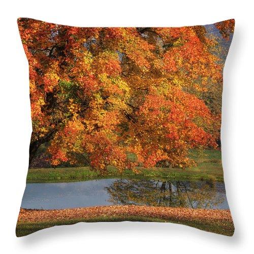 Tree Throw Pillow featuring the photograph Orange Crush by Lori Deiter