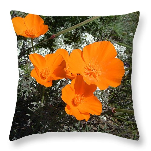 Flowers Orange Landscape Wildlife Nature California Throw Pillow featuring the photograph Orange Delight by Brenda Salamone
