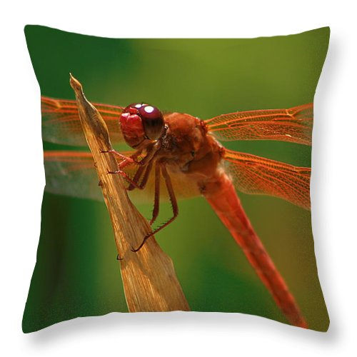 Photo Of Dragonfly Throw Pillow featuring the photograph Orange Dragonfly by Doug Dailey