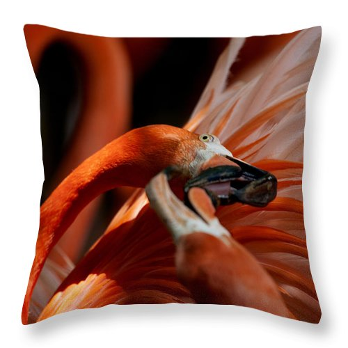 Orange Throw Pillow featuring the photograph Orange Flamingos Conflict Resolution by Douglas Barnard