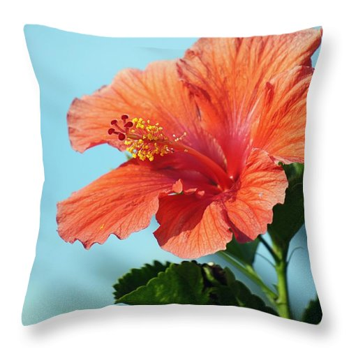 Hibiscus Throw Pillow featuring the photograph Orange Hibiscus by Jenny Hudson