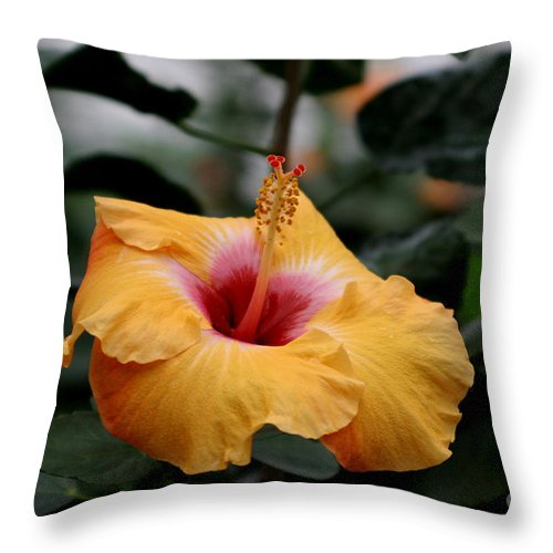 Hibiscus Throw Pillow featuring the photograph Orange Hibiscus by Living Color Photography Lorraine Lynch