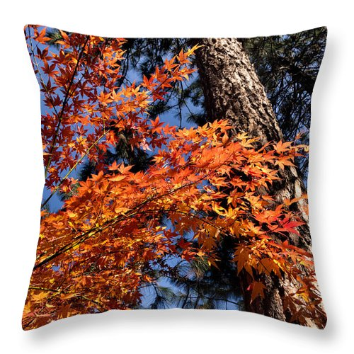 Fall Throw Pillow featuring the photograph Orange Maple by Kathleen Bishop