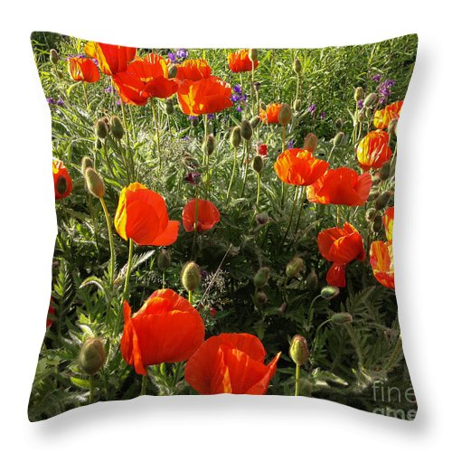 Poppies Throw Pillow featuring the photograph Orange Poppies In Sunlight by Kerstin Ivarsson