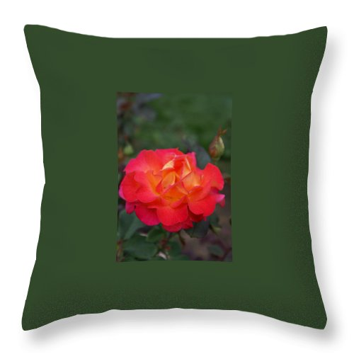 Yellow Rose Throw Pillow featuring the photograph Orange Rose With Pink Petals I by Jacqueline Russell