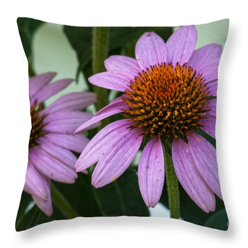 Prairie Splendor Coneflower Throw Pillow featuring the photograph Orange Sunshine by Dale Powell