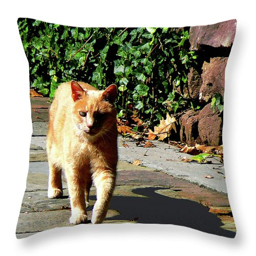 Cat Throw Pillow featuring the photograph Orange Tabby Taking A Walk by Susan Savad