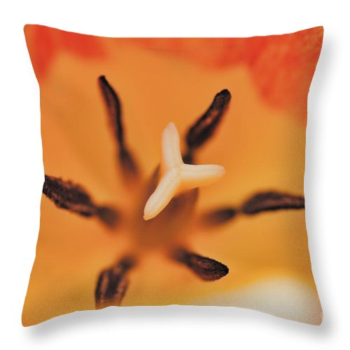 Orange Tulip 3 Throw Pillow featuring the photograph Orange Tulip 3 by Chris Fleming