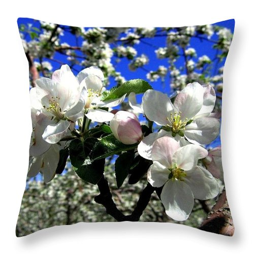 Apple Blossoms Throw Pillow featuring the photograph Orchard Ovation by Will Borden