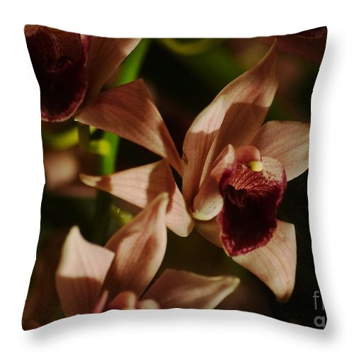 Plant Throw Pillow featuring the photograph Orchid 137 by Rudi Prott