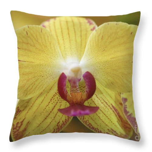 Plant Throw Pillow featuring the photograph Orchid 141 by Rudi Prott