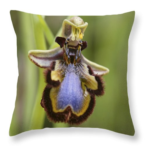 Orchid Throw Pillow featuring the photograph Orchid 25 by Ingrid Smith-Johnsen