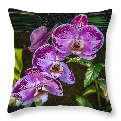 View Throw Pillow featuring the photograph Orchid Flowers Growing Through Old Wooden Picture Frame by Alex Grichenko