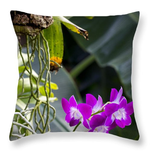 Orchid Throw Pillow featuring the photograph Orchid In Bloom by Robert Storost