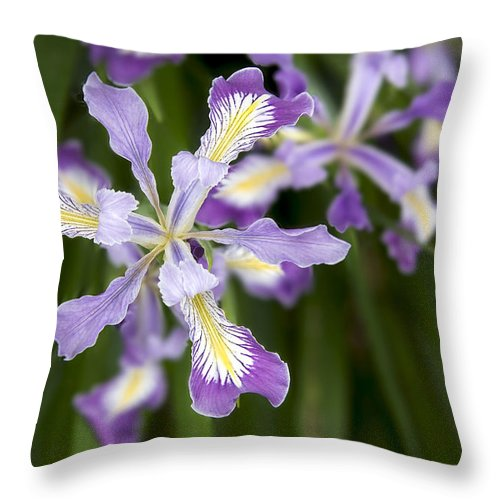 Oregon Throw Pillow featuring the photograph Oregon Irises In Bloom Closeup by Jit Lim
