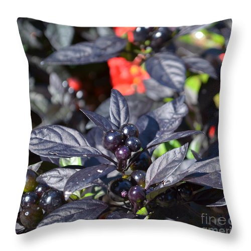 Ornamental Peppers Throw Pillow featuring the photograph Ornamental Peppers by Luther Fine Art