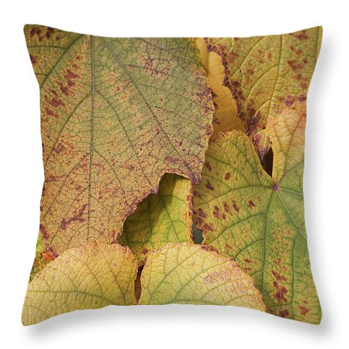 Coin Throw Pillow featuring the photograph Ornamental Vine by Kim Haddon Photography