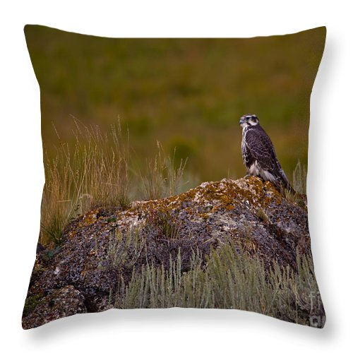 Bird Throw Pillow featuring the photograph Osprey On A Rock  #7626 by J L Woody Wooden