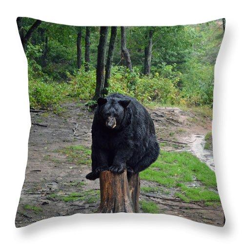 Bear Throw Pillow featuring the photograph Oswald's Bear by Kurt Bonnell